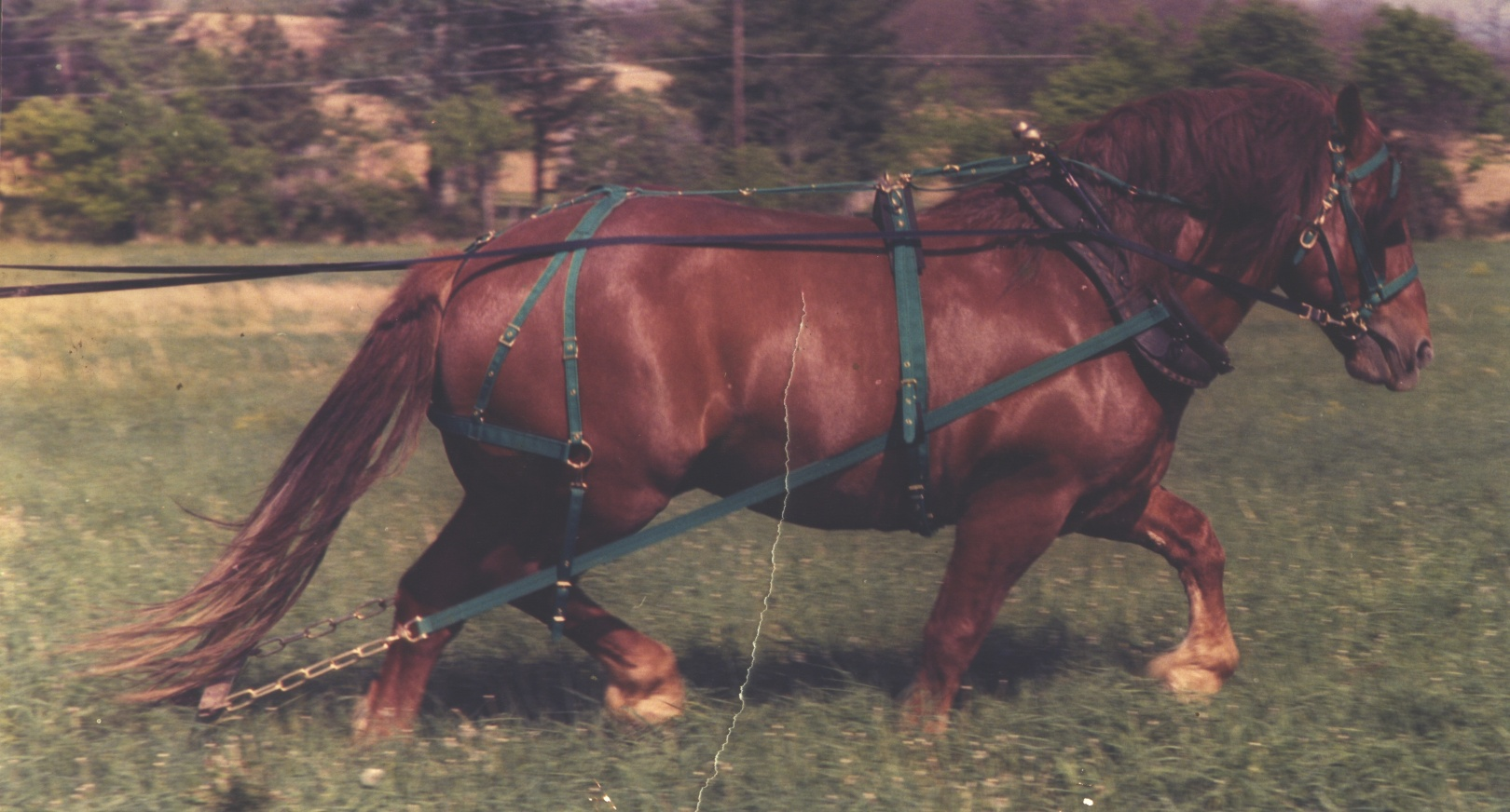 No. 4100 harness
