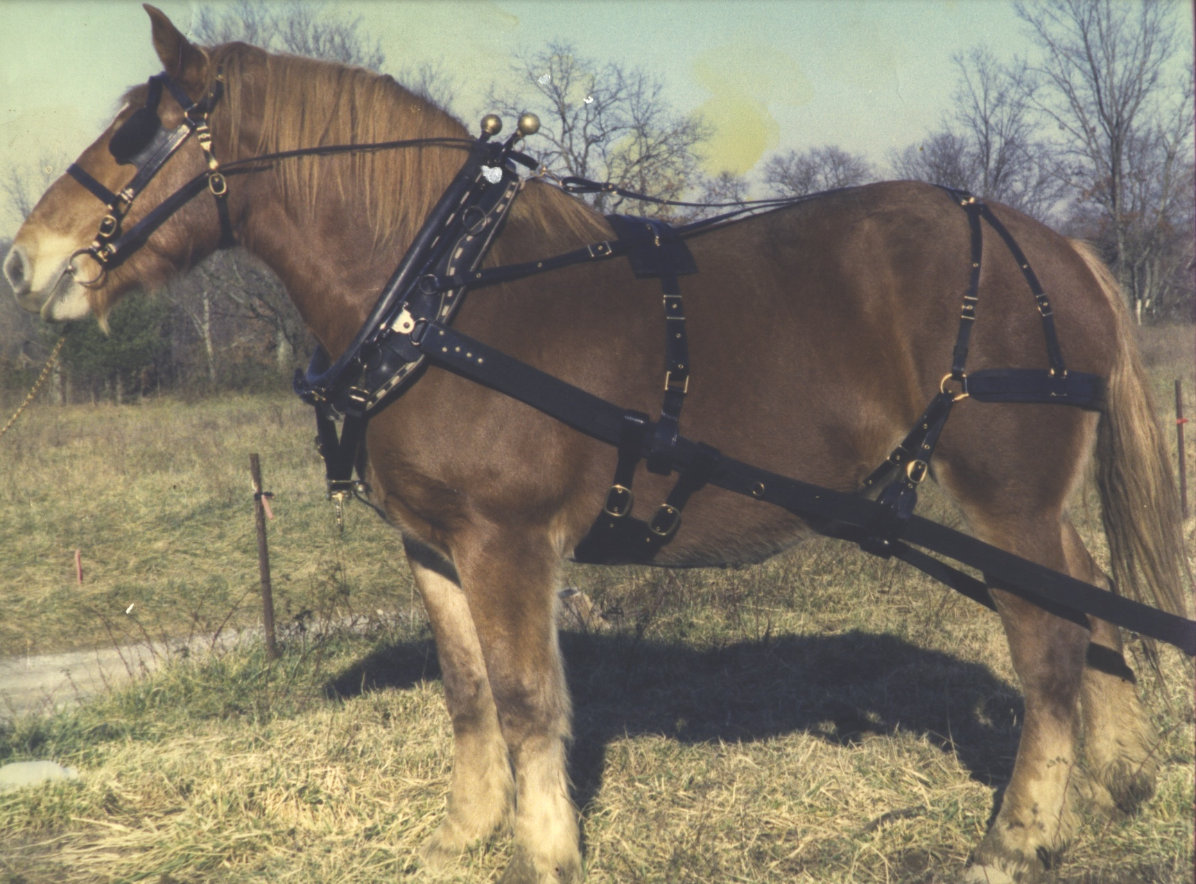 plow horse harness